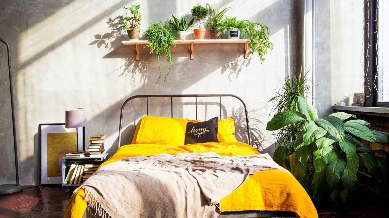 10 گیاه شگفت انگیز مناسب نگهداری در اتاق خواب